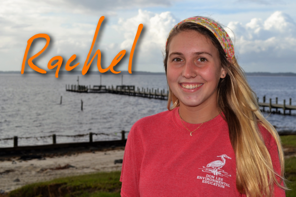 Hi, my name is Rachel Campbell. I just finished my degree at Appalachian State in Outdoor Recreation. I spent this past summer at Camp Don Lee as an intern. My favorite sea creature is the sea turtle!